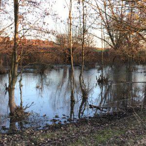 Überflutung Renaturierung Selz Sörgenloch